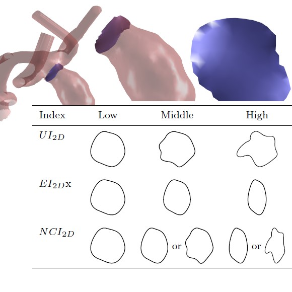 Definition and Extraction of 2D Shape Indices of Intracranial Aneurysm Necks for Rupture Risk Assessment