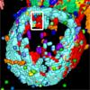 Visualization and Exploration of 3D Toponome Data