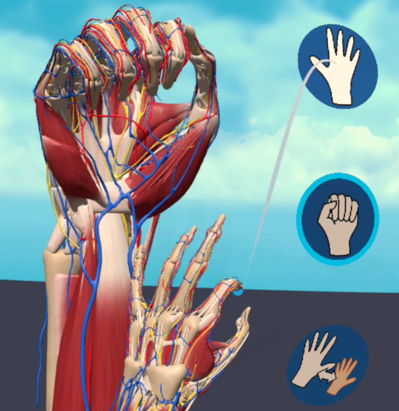Learning Hand Anatomy with Sense of Embodiment